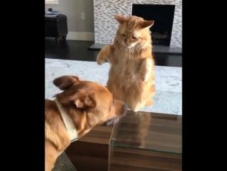 Игры собакена и котейки