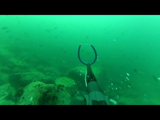 Подводная охота во Владивостоке. ТЕРПУГ. Spearfishing
