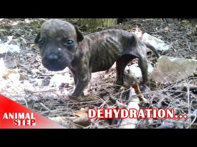 Rescuing Homeless Dogs in Dehydration and Malnutrition