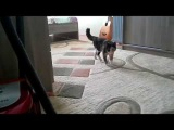 Кошка Ася потихоньку выходит из комнаты