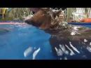 The monstrous attack of a hippo on a man Чудовищное нападение бегемота на человека