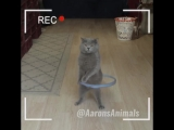 Как котики снимают вирусные видео