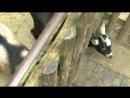 Умные козы ищут хавчик ;-)