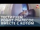 Тестим робот-пылесос ВМЕСТЕ С КОТОМ