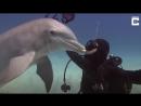 Целовашки с дельфинами