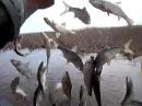 Вот это РыбалкаТы не поверишьЭту страну не победить201793