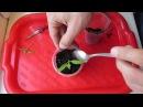Выращивание рассады помидоров - мой простой способ 2 часть