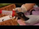 Три детеныша циветты родились в нижегородском зоопарке Лимпопо