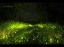 Nature Sounds - Звуки природы Ночные Птицы, Цикады, Сверчки Night Birds, Cicadas and Crickets