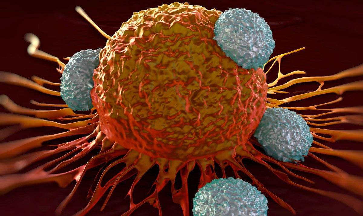 Особенности иммунной системы человека