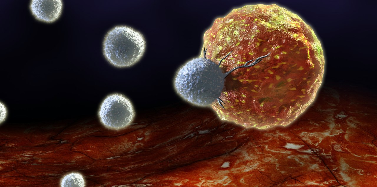 Главная функция иммунной системы