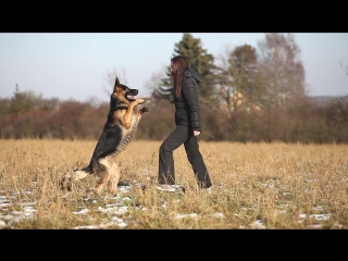 german shepherd Lexus (Ares Slovraj) - Tricks