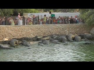 Крокодиловая ферма,Остров Джерба (Тунис) ,Октябрь 2016г