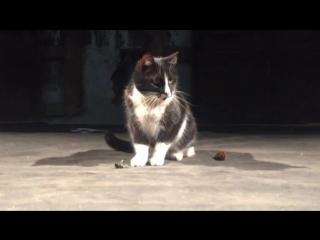 Кошка Жозефина на сцене Анненкирхе