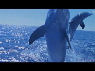 Шум морского прибоя и красивая музыка