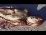 Русалки 10 доказательств видео