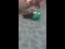 Побег крабов из багажа в аэропорте Нью Йорка