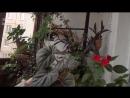 Прохладная зимовка комнатных растений