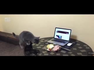 Как отучить кота ходить по столу [720]