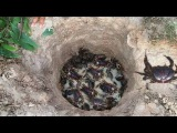 Smart Boy Make eazy deep hole Crab Trap to catch alot of Crab - How to make crab trap in cambodia
