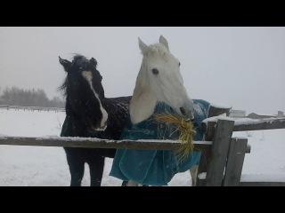Очень жадная лошадь!