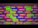 Научно-популярный фильм: Архангельские водоросли