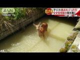 小ジカ流されぐったり・・・なぜ住宅街の用水路に?(17/06/02)