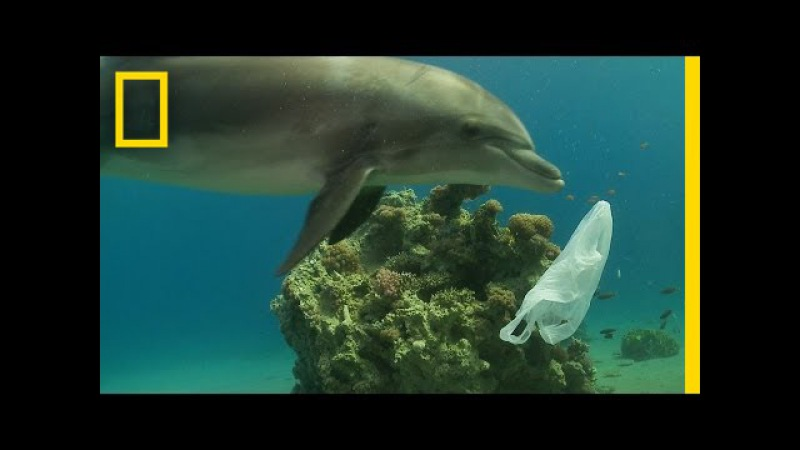 How We Can Keep Plastics Out of Our Ocean | National Geographic