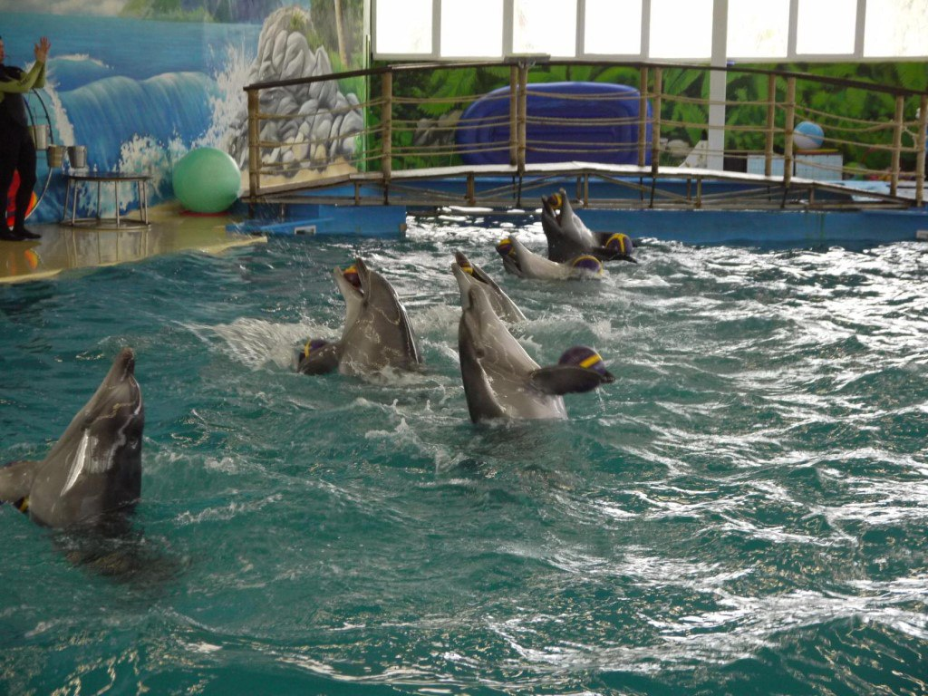 Дети-Ангелы Дзержинск посетили Нижегородский дельфинарий