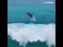 Дельфины любят волны