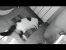 кошка поцпанкер