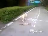 Кот притворился мертвым