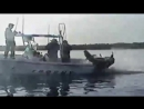 Приколы на рыбалке Топ приколы с животными 2016 Нарезка _ Top 10 - YouTube