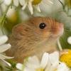 Mice Liberation