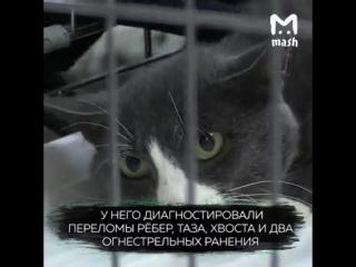 Кот по кличке Васек, пострадавший от живодеров ИЩЕТ ХОЗЯИНА!
