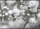 Hasse - Didone abbandonata - Cadra fra poco in cenere (Valer Barna-Sabadus)