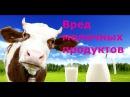 Сыроедение. Вред молочных продуктов .