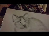 I'm drawing a picture of kitty