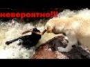 ЭТО НЕВЕРОЯТНО😱 ЖИВОТНЫЕ СПАСАЮТ ДРУГ ДРУГА😻🐕🐈 ANIMALS HEROES СПАСЕНИЕЖИВОТНЫХ