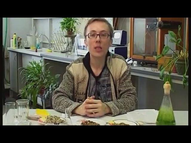 Таволга (лабазник) — лекарство от 100 недугов
