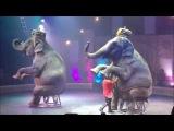Цирк Кобзов WOOZU Одесса! Слоны!Жираф!Зебры!Верблюды! Circus Elephant Girafe Camel