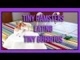 Tiny Hamster Eating Tiny Burritos (Ep. 1)