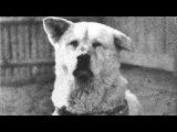 TRANCE) I am a friend (Paul Pele - Line of destiny (Original Mix))