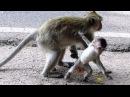 Kidnapper Baby Monkey Never Love Baby Monkey - Kidnap Monkey Don't Care About Baby Monkey