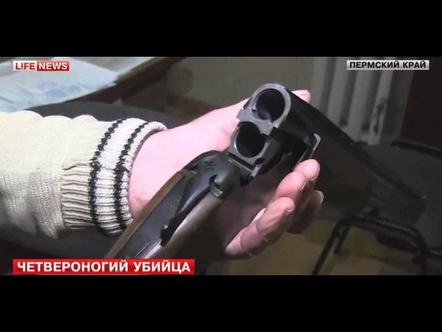 В Пермском крае охотничий пес случайно застрелил хозяина
