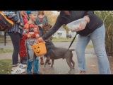 Дети реагируют на собаку спасательной собаки,