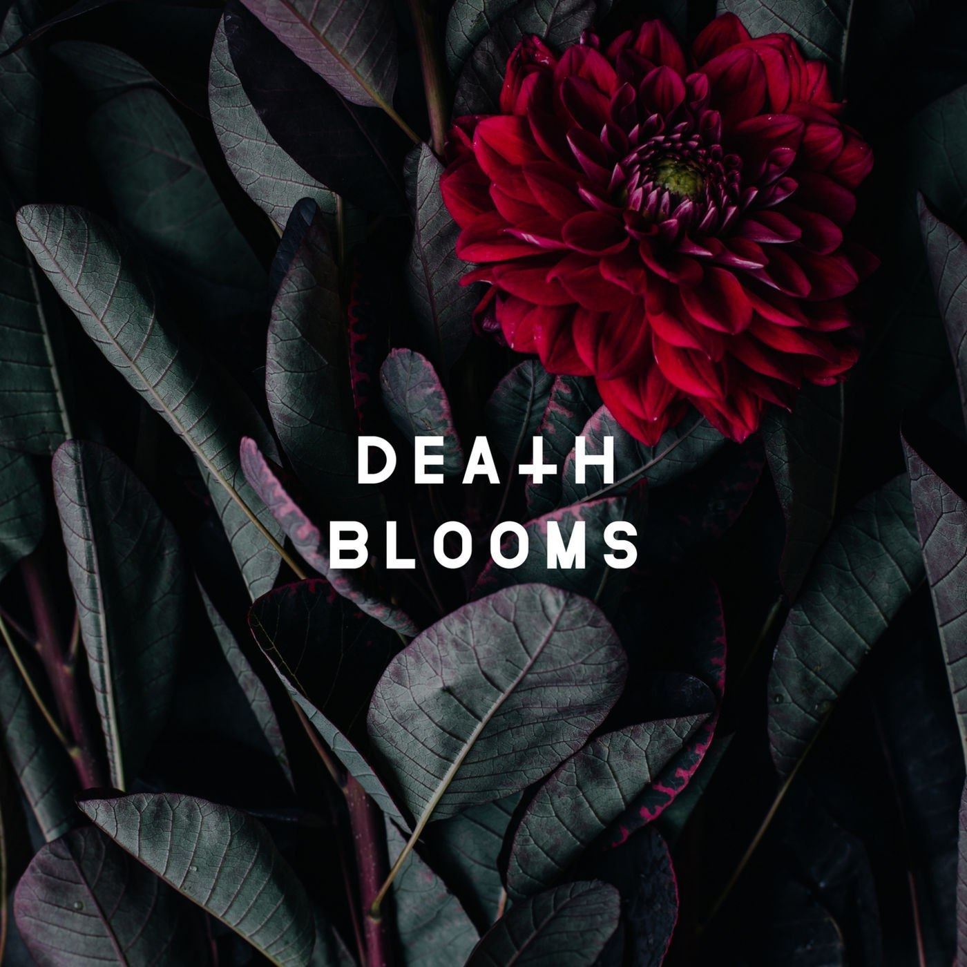 Death Blooms - Death Blooms [EP] (2017)