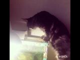 Пушистый рыбачок :))