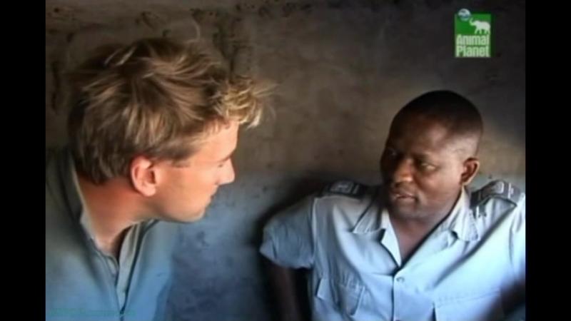 BBC «Заповедник в дебрях Африки» (19 серия) (Реальное ТВ, животные, 2006)