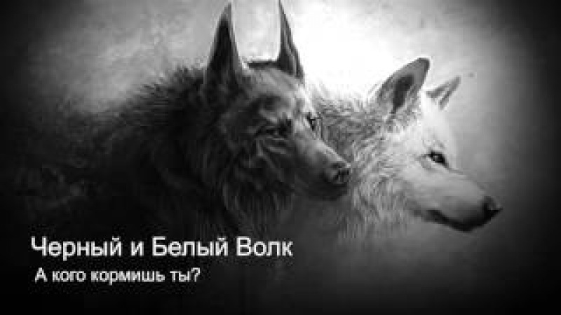 Черный и Белый Волк